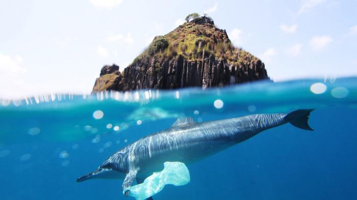 "Figure 1: ""Dolphin plastic bag at Fernando de Noronha"", Source: CC by Jedimentat44"